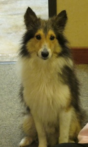 Day 31.  Dale Carnegie's principles gave me courage to save Lassie's relative. Part 1
